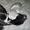 Мраморные плюшевые британские котята редких окрасов #973467