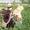 Предварительная запись на щенков лабрадора ретривера #1002793