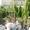 Озеленение, удобрения,  посадочный материал,  уход за садом #1654301